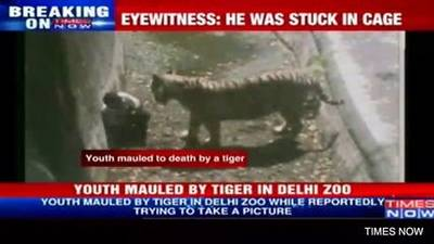 News video: White Tiger Kills Zoo Visitor In India